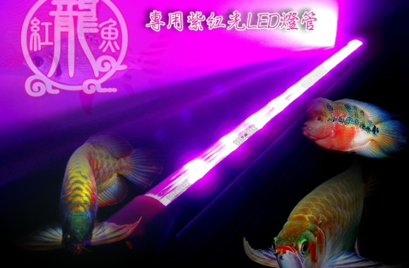 arowana-led-light